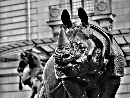 "Rhino • <a style=""font-size:0.8em;"" href=""https://www.flickr.com/photos/54878256@N00/15137002247/"" target=""_blank"">View on Flickr</a>"
