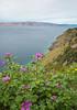 Looking out towards Rab, Velebitski canal, Croatia (Miche & Jon Rousell) Tags: pink flowers sea green islands coast croatia adriatic adriaticsea dalmatia rab dalmatiancoast velebit velebitskicanal