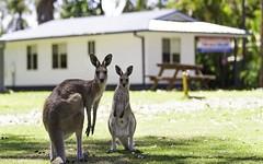 17 Grevillia Street, Darlington Beach Holiday Park, Arrawarra NSW