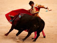 Faena de Jose Maria Manzanares (orel30) Tags: de maria jose toros corrida muleta bullfighting manzanares torereo