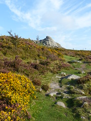 P1010336 (jrcollman) Tags: plants places devon dartmoor haytor ulexgallii cplant crataegushawthorn haytortohoundtor