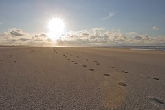 Footsteps in the sand (DeLaPorte_NL) Tags: sunset sea holland beach netherlands terschelling clouds sand footsteps the northsee