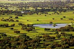 Sight from the top of Alter Pedroso, Alentejo (o_Paulo) Tags: primavera field landscape spring paisagem campo alentejo olm sobreiro azinheira corkoak alterdocho montado alterpedroso