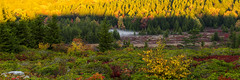 doly sods pano 2 (photo_scott) Tags: bear trees light mountains west nature forest sunrise canon scott golden virginia woods rocks wv hour dolly spruce kennedy sods 60d wwwskennedyphotoscom