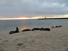Galapagos - San Cristobal-221