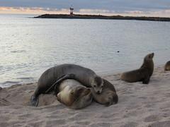 Galapagos - San Cristobal-243
