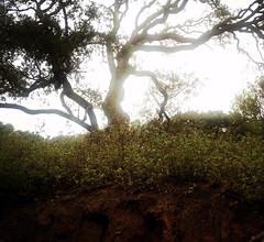 Cala Pilar.Menorca.09-14 (joseluisgildela) Tags: menorca playas calapilar