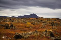 sland. (Separate Sky) Tags: travel autumn fall nature beauty landscape island lava iceland dramatic adventure explore journey myvatn dimmuborgir