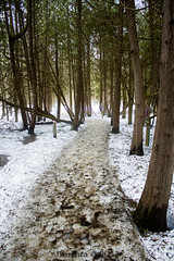 Wye Marsh Path (Mesembrina) Tags: trees winter mist snow forest path marsh wyse