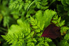 Herbst (Bildverordnung) Tags: red detail green rot nature grass deutschland bokeh sony natur meadow wiese grün makro blatt ulm leav sigma2870f28ex alpha77 a77v bildverordnung