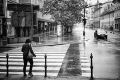 Rain (Al Fed) Tags: street woman car rain crossing ljubljana slovenija pouring 20140909