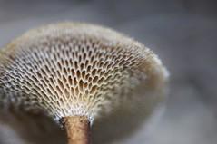 Desconocido 2 (Javier Acevedoo) Tags: mxico mushrooms hidalgo pachuca mxico