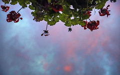 CLouds (Fjstange) Tags: chile red sky orange cloud sun green sol colors clouds de landscape landscapes arquitectura sony magic fineart cityscapes ciudad colores cielo nubes flare redsky silueta alpha puesta aire libre cloudporn nube anochecer dreamscape sunflare serenidad sunligth redplanet fullcolor sunchine skyporn marss sundowns a7s