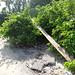 Trash on Pulau Ubin