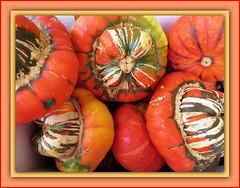 Autumn Colours (bigbrowneyez) Tags: autumn stilllife fall beautiful vegetables pumpkin fantastic gorgeous harvest shapes tasty autumncolours textures squash fancy designs colourful fabulous belli artful eyecandy workofart bellissime