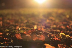 The return of Autumn (Sandy Sharples) Tags: park autumn sunset red orange leaves season victoriapark rust illumination dry goldenhour