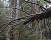 Fallen Tree (Patrick J. McCormack) Tags: tree mamiya film nature analog forest mediumformat vermont kodak rz67
