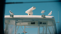 Seagulls on a yacht (Conundrum75) Tags: summer seagulls west yacht seagull australia perth western wa