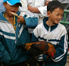 Local boys with gamecock, Bac Ha Market, Bac Ha, Lào Cai Province, Vietnam (Darius Travel Photography) Tags: market cock vietnam rooster gamecock cockfighting viêtnam bacha петух việtnam turgus socialistrepublicofvietnam bắchà bachamarket рынок gaidys vietnamas cộnghòaxãhộichủnghĩaviệtnam vjetnama ветнам вьетнам làocaiprovince républiquesocialisteduviêtnam sozialistischerepublikvietnam петушиныйбой социалистическаяреспубликавьетнам базарбакха бакха ярмаркабакха рынокбакха 共和社會主義越南 vietnamosocialistinėrespublika