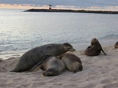 Galapagos - San Cristobal-242