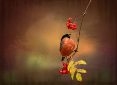 Autumn Feast (maom_1 (Off, most of the time)) Tags: fineart digitalpainting