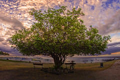 Two benches, one tree and a lovely view ... (thanks for your visits & comments...) Tags: ocean sea seascape tree beach clouds landscape boats seaside pentax indianocean atmosphere fisheye blueskies benches mauritius ilemaurice pentaxk5