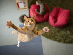 HugMe (rampx) Tags: me cat jump hug pentax action kittens neko irori miaw 645z