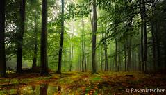 Buchenwald (Rasenlatscher) Tags: autumn canon buchenwald laub herbst l landschaft wald spiegelung vorpommern langzeitbelichtung mecklenburgvorpommern buchen pftze forst leefilter rasenlatscher 1635is