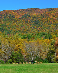 Harvest in the Cove (jscollins7) Tags: harvest cadescove greatsmokymountainsnationalpark gsmnp fallfoliaage