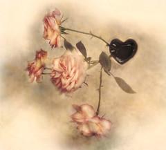 from the heart   11/ 52 Cenital (Ani Carrington) Tags: rose roses flowers vintage petals texture textured heart vase water shotfromabove cenital stilllife 52stilllifes square macro flower stillife