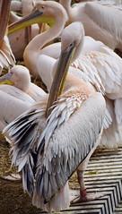 Amsterdam - Artis (jschort10) Tags: city spring amsterdam zoo artis animals birds grachten rondvaart dagje uit