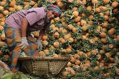 Pineapple man (martien van asseldonk) Tags: martienvanasseldonk dhaka bangladesh