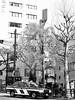2017年3月30日 (atmo1966) Tags: digitalphotography blackandwhite canon canonpowershots90 tokyo yasukuni