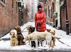 Dog Walker at Acorn Street ((Jessica)) Tags: snow acornstreet snowstorm blizzard beaconhill dogs dogwalker dog boston massachusetts newengland winterstormniko