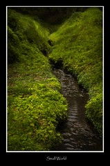 small world (tiggerpics2010) Tags: scotland nature westhighlands woodland moss mossy trees growth life green river