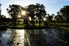 Summer Afternoon (Mama Shaz) Tags: goldenhour parklands tyto landscape sunlight rays reflectedlight shadows silhouttes water