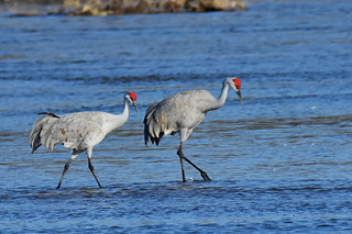 Cranes on the river