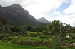 South Africa (Lor Venise) Tags: botanicalgarden export fiori fleurs flowers garden giardino natura nature southafrica sudafrica botanico