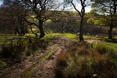 1920p 72dpi-7177 (reach.richardgibbens) Tags: bowland lancashire england uk littledale fell moorland moor valley dale