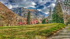 HDR colours (Giuseppe 93) Tags: autofocus landscape italy italia nopeople nature hdr naturethebest lg lgg4 colors panorama bellaitalia tree sky alps mountains magicmoment clouds outdoor season