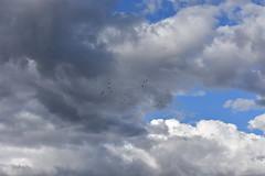 Tarde de nubes (esta_ahi) Tags: latorredenvernet cel cielo sky núvols nubes clouds santmartísarroca penedès barcelona spain españa испания pájaros aves fauna