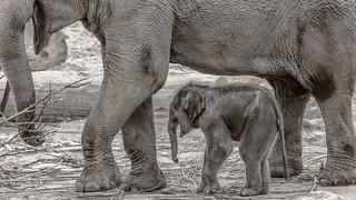 Moma mit Mama