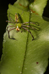 Coney Island Spider (thecrapone) Tags: singapore spider cony island nature wildlife