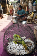 Caged dreamz (Rajib Singha) Tags: travel street people pet bird outdoor interestingness flickriver nikond7200 kolkata westbengal india
