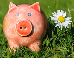 Macro Mondays - Glaze (that Geoff...) Tags: macro mondays macromondays glaze ceramic clay pig daisy garden pink canon 70d pottery earthenware cute glazed piggy