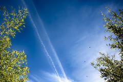Hello blue sky (katatomicuk) Tags: 206365 sky blue bamboo macclesfield cheshire