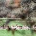 Vårkänslor - möte med hjortar på promenaden