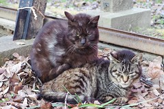 Today's Cat@2017-03-28 (masatsu) Tags: cat thebiggestgroupwithonlycats catspotting pentax mx1