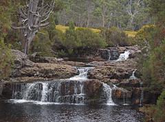 Cascades, Cradle Mountain, Tasmania (nisudapi) Tags: 2017 tasmania cradlemountain creek water trees australia pencilpines cascade waterfall