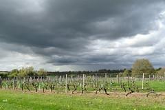 ciel menaçant (mchub) Tags: ciel vignes la mayenne hx400v